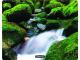 294882: Imagen de FELLOWES ALFOMBRILLA